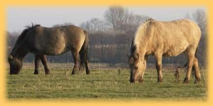 pferdebestand in deutschland 2018